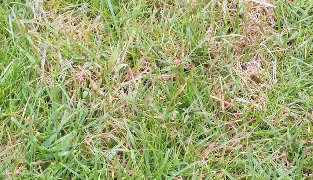 Brown patches on my lawn