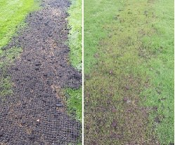 how to get grass seed to germinate