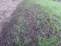 how to repair a bare patch in a lawn