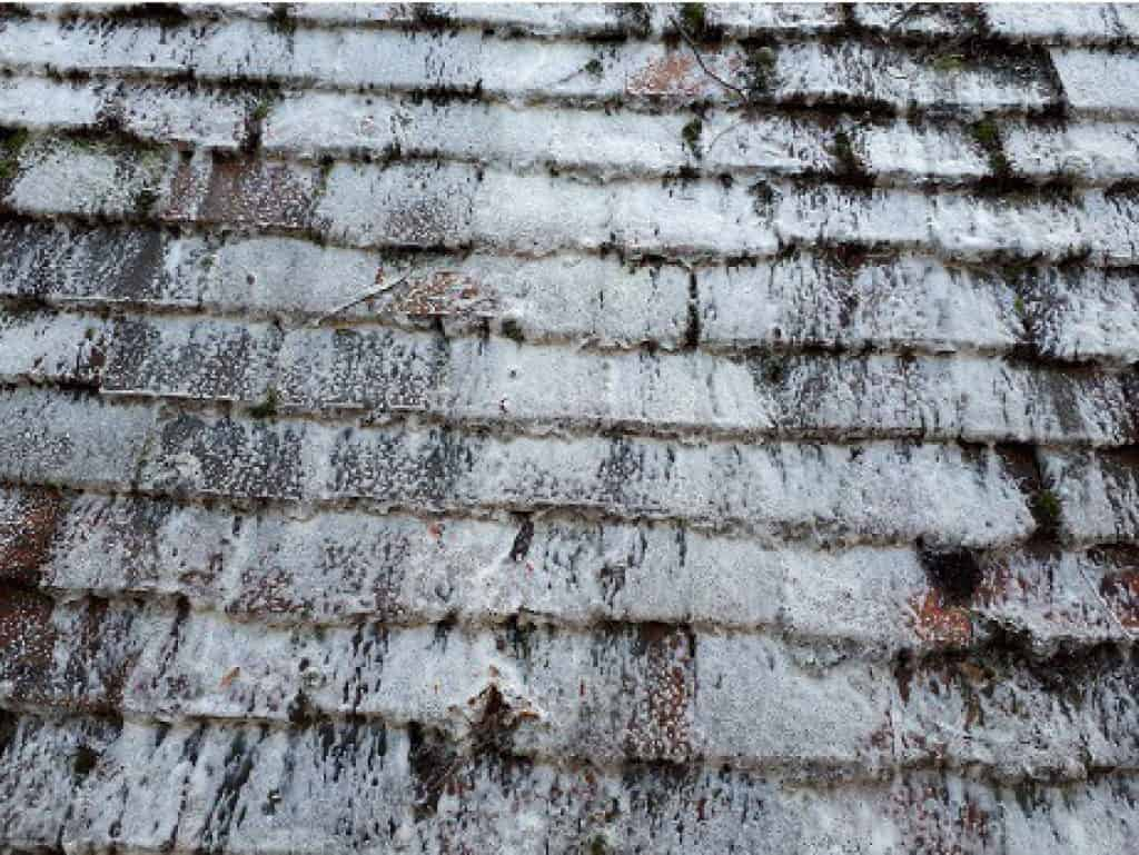 how to get rid of moss on roofs