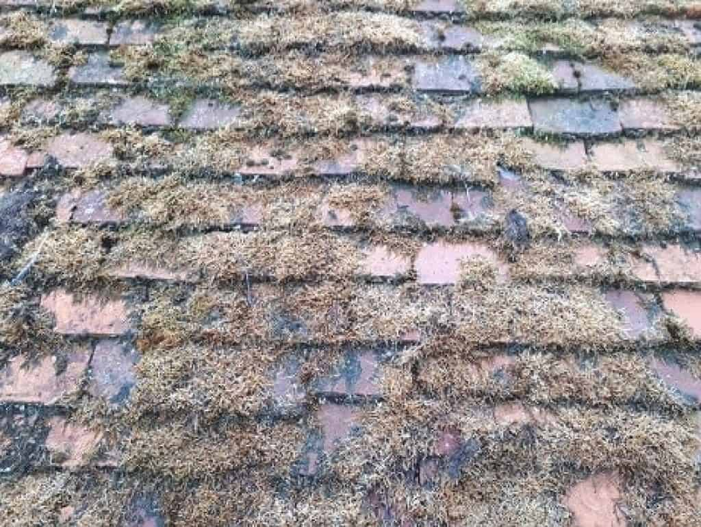 moss killer roof