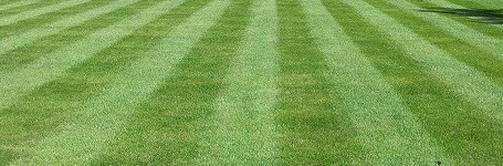 how to  improve lawn