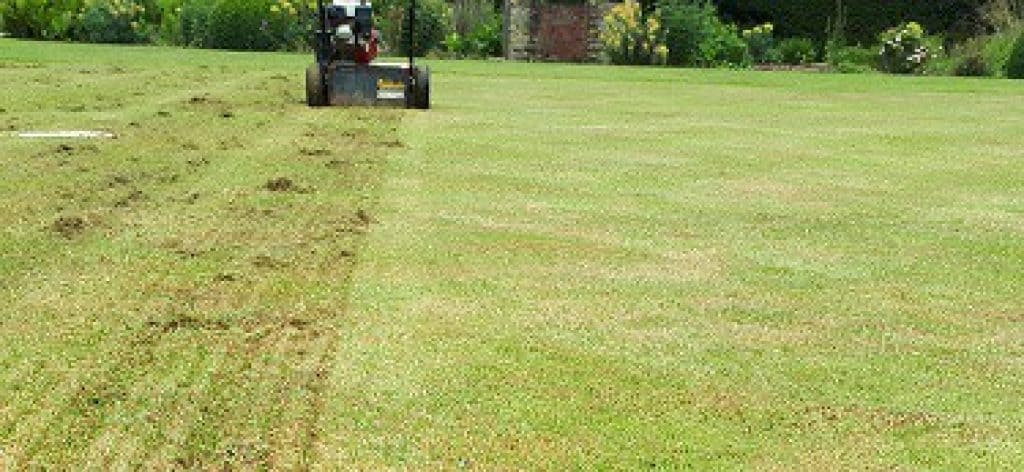 how to improve your lawn in spring uk