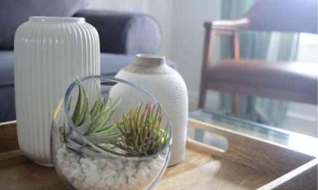 best plants for bedrooms