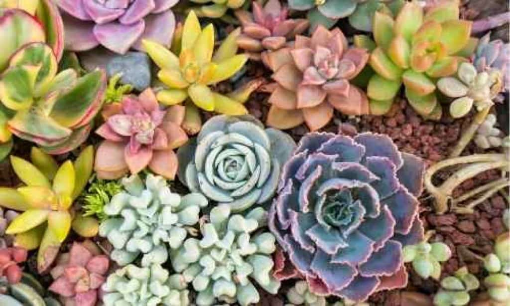 tiny planters for succulents